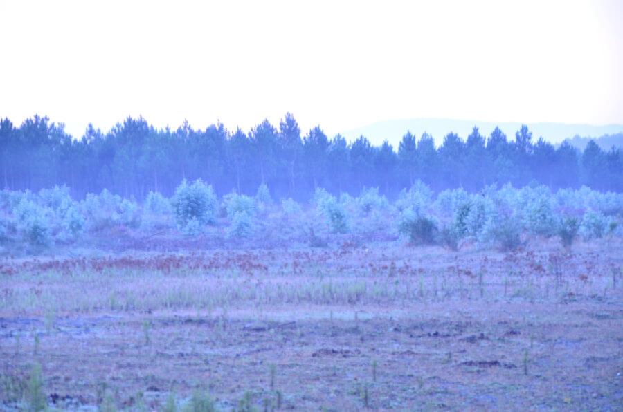 ホワイトバランス蛍光灯写真