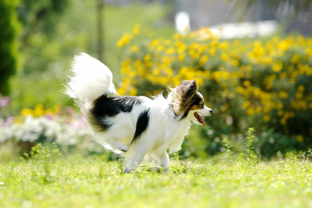 犬瞬間写真撮影