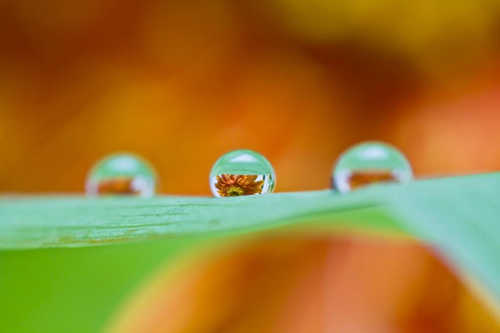 水滴マクロレンズ写真