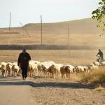 9.スペイン横断、徒歩で800Km。巡礼の旅、カミーノ・デ・サンティアゴ(Carrion~Templarios偏)