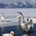 2月に行きたい北海道の撮影スポット。