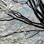 冬も終盤。裏山散策して樹氷を撮影しました。