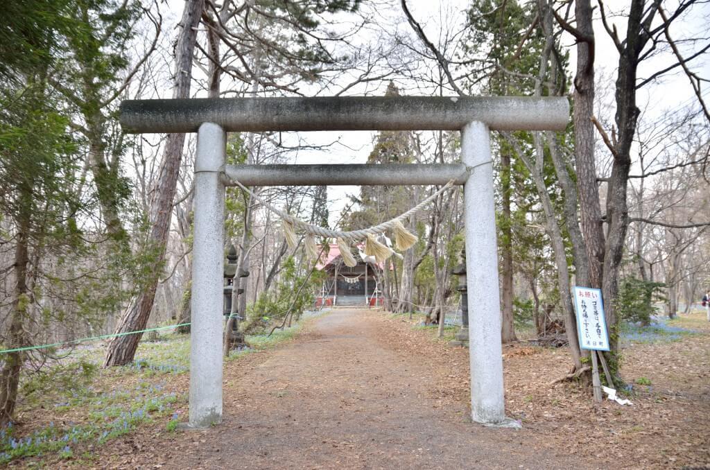 浦臼神社のカタクリとリス