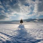 美瑛で「クリスマスツリーの木」を撮影!ここは異世界!いい写真が撮れた!
