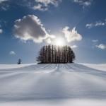 冬の美瑛、「マイルドセブンの丘」を撮影!どこまでも透き通る雪景色・・・。