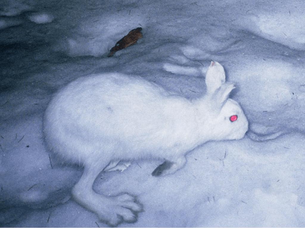 出典:北海道森林管理局