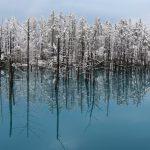 初雪の美瑛「青い池」に行ってきた!息を飲む絶景とはまさにこのこと!