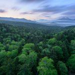 三国峠で新緑を撮影してきた!美しい景色を堪能してきました!