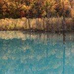 美瑛の青い池で紅葉を撮影した!定番スポットを定番構図で撮る!