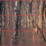 構図を組み立てる過程④!フクロウの森を撮影した時に考えたこと。