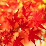 紅葉を上手く撮影するための方法。紅葉を鮮やかにドラマチックに撮影したい。