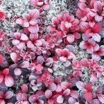 今年も紅葉を撮影。北海道では紅葉が始まっています。