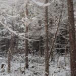 あちこちで冬景色を撮影。少しずつ冬が近づいてきました。