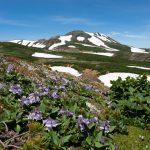 旭岳から黒岳石室でテント泊登山。お鉢を一周してきた。